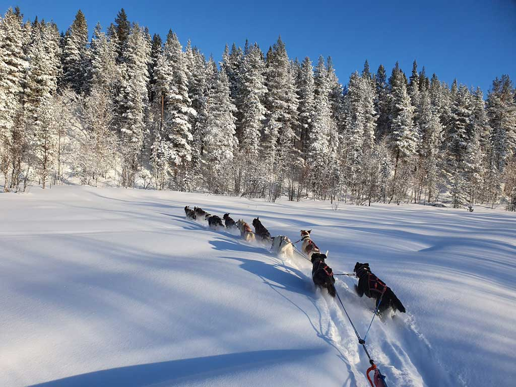 Husky safari in Ivalo, Lappland.