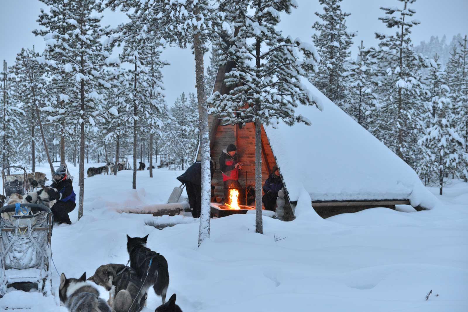 Unforgettable husky tour in Finland.