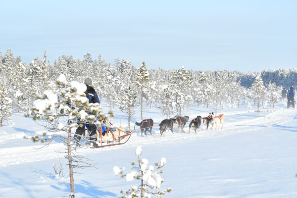 Husky tour in Lapland, Finland.